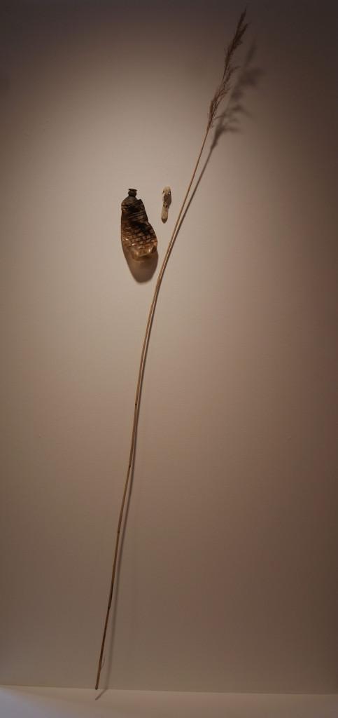 vis-eend-riet-overal-web